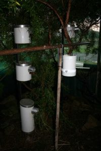 PVC Nest Boxes in avairy budgies