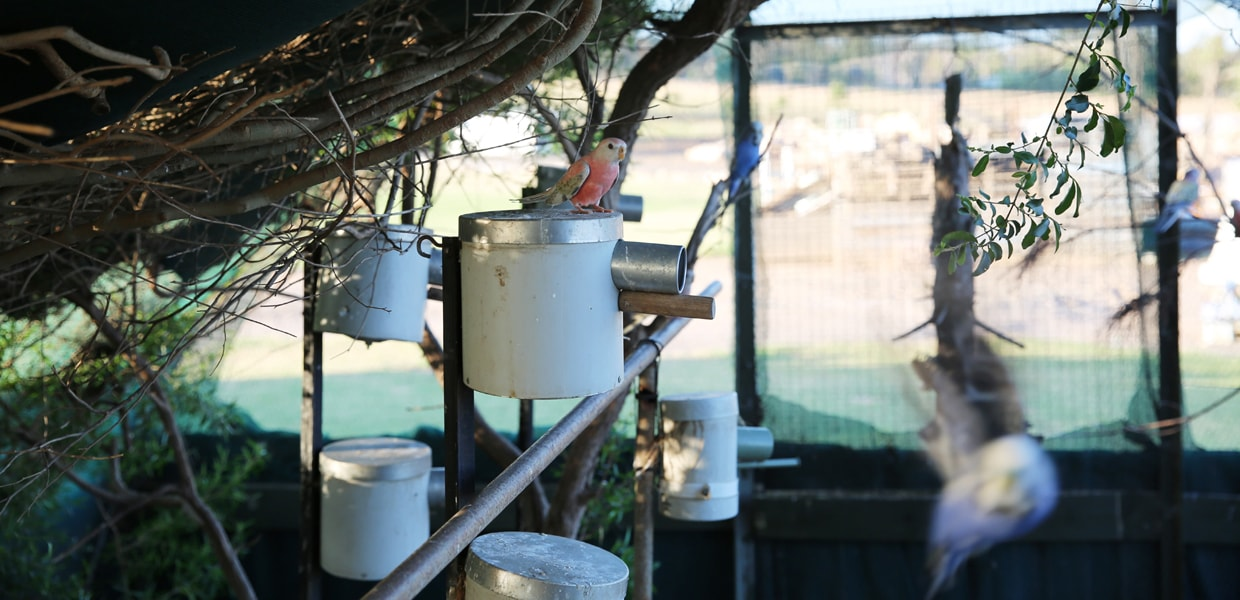 Nest boxes in avairy for gouldian finches slider