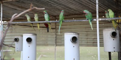 Nest boxes in avairy for parrots-slider