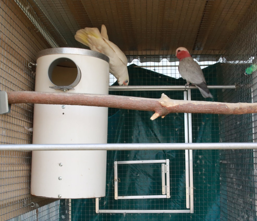 corella with galah on pvc nest box