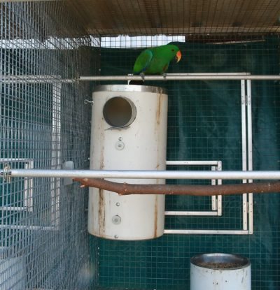Green parrot sitting on top of pvc nest box