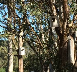 pvc nest boxes in trees