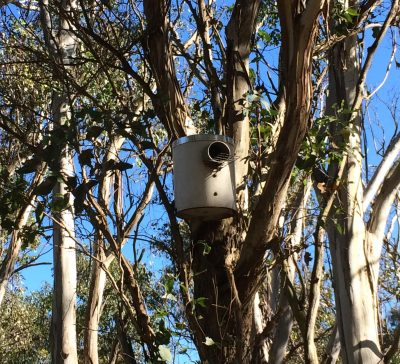 Small pvc nest box high up in tree