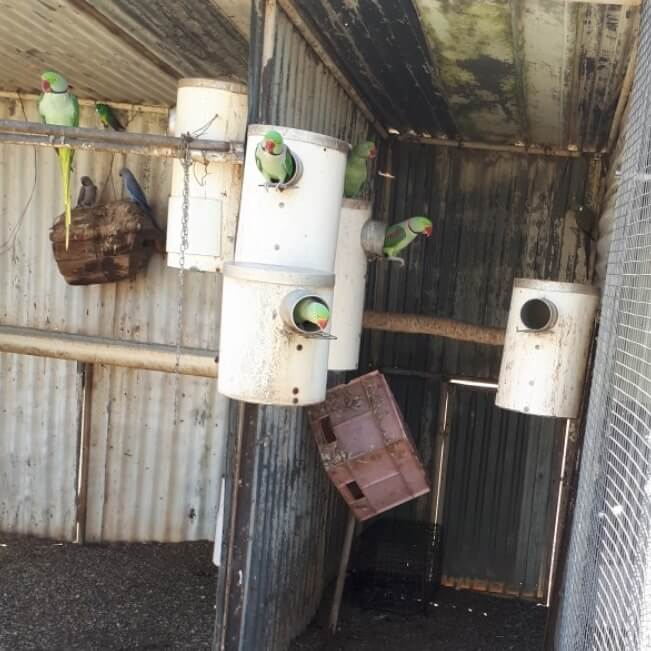 Parrots in PVC nest boxes